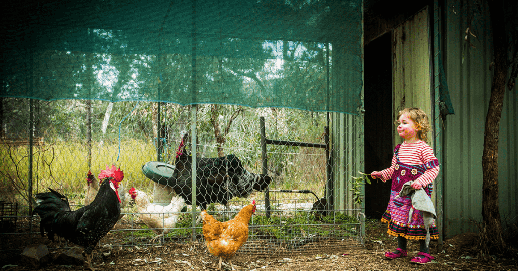 A young girl dressed in a purple dress standing in a chicken coop ready to feed the hens walking around her