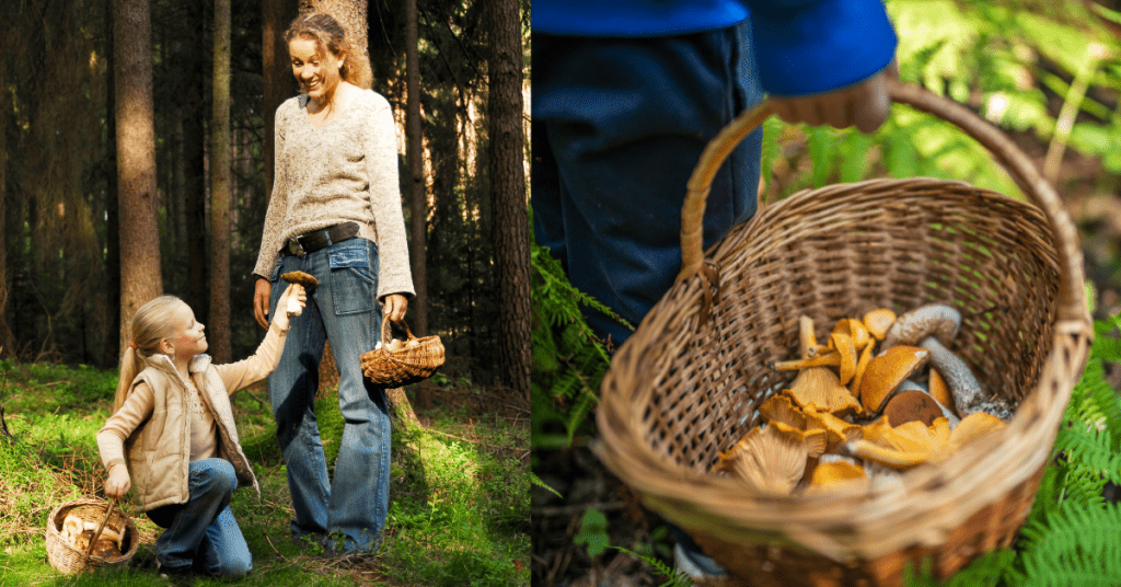A woman and a young girl walking foraging for mushrooms in the forest and a basket containing collected mushrooms