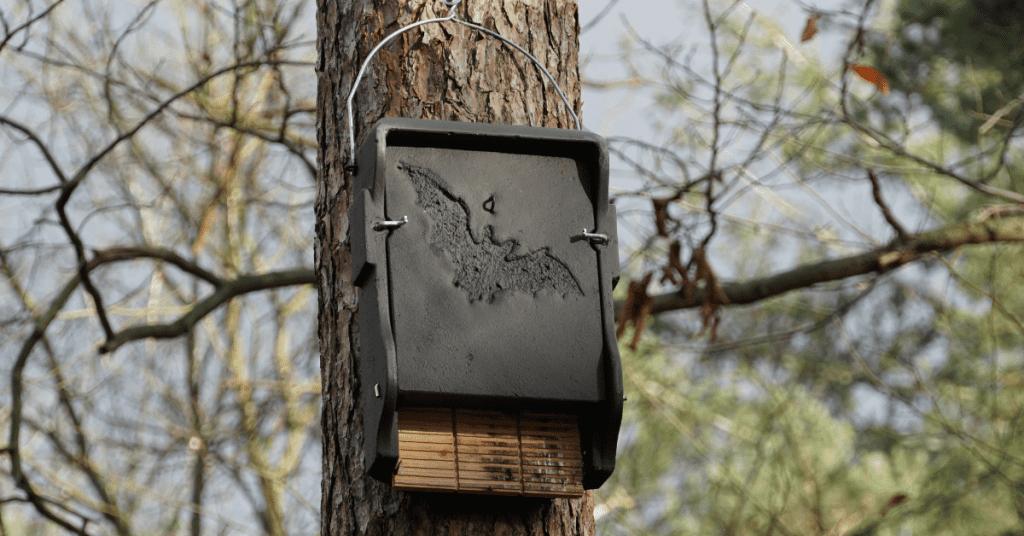 Baroosting Boxes Artificial Habitat For Bats